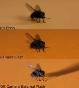 Lighting Comparison flies